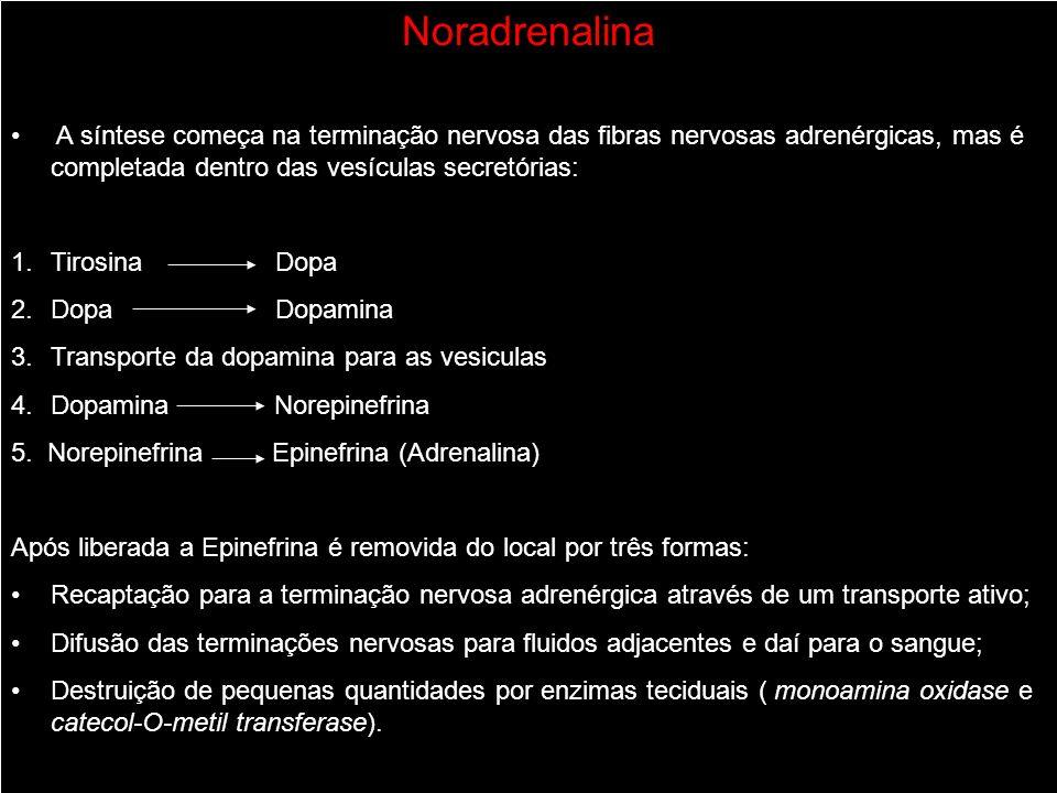 Noradrenalina A síntese começa na terminação nervosa das fibras nervosas adrenérgicas, mas é completada dentro das vesículas secretórias: 1.Tirosina D