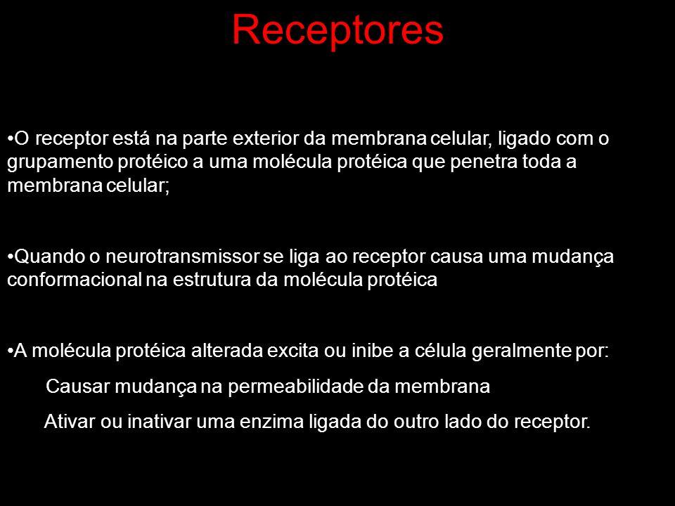 Receptores O receptor está na parte exterior da membrana celular, ligado com o grupamento protéico a uma molécula protéica que penetra toda a membrana