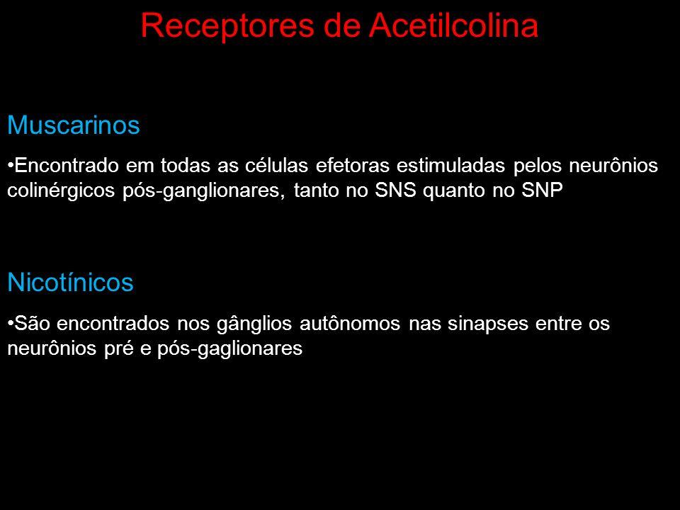 Receptores de Acetilcolina Muscarinos Encontrado em todas as células efetoras estimuladas pelos neurônios colinérgicos pós-ganglionares, tanto no SNS