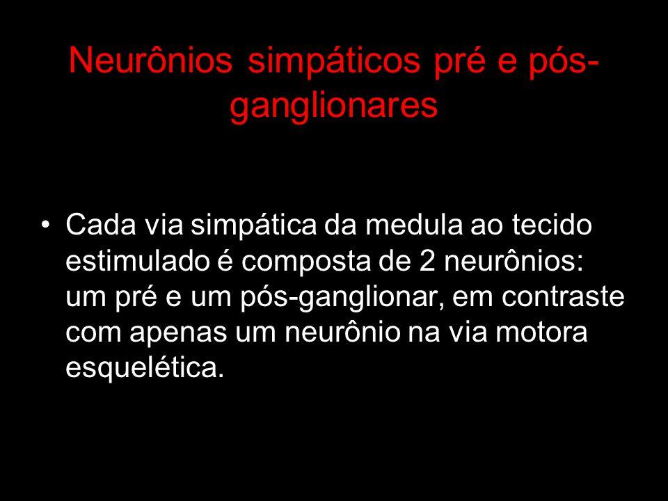 Neurônios simpáticos pré e pós- ganglionares Cada via simpática da medula ao tecido estimulado é composta de 2 neurônios: um pré e um pós-ganglionar,