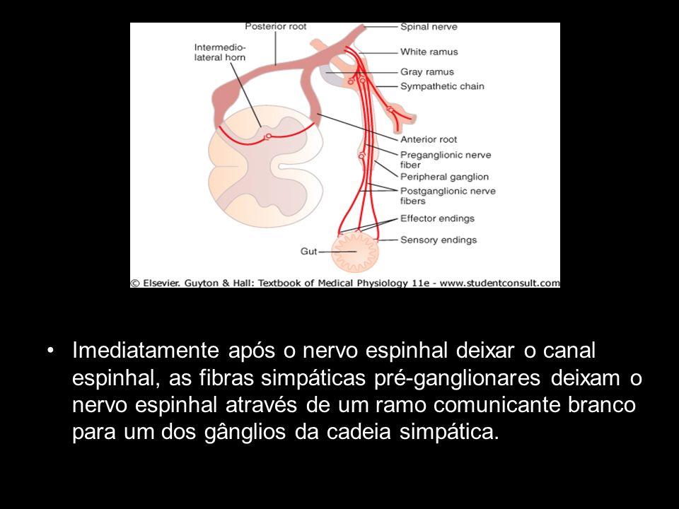 Imediatamente após o nervo espinhal deixar o canal espinhal, as fibras simpáticas pré-ganglionares deixam o nervo espinhal através de um ramo comunica