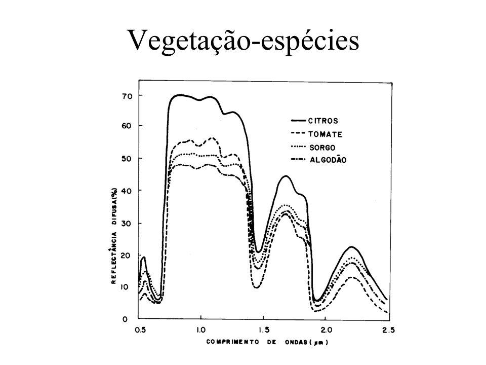 Vegetação-espécies