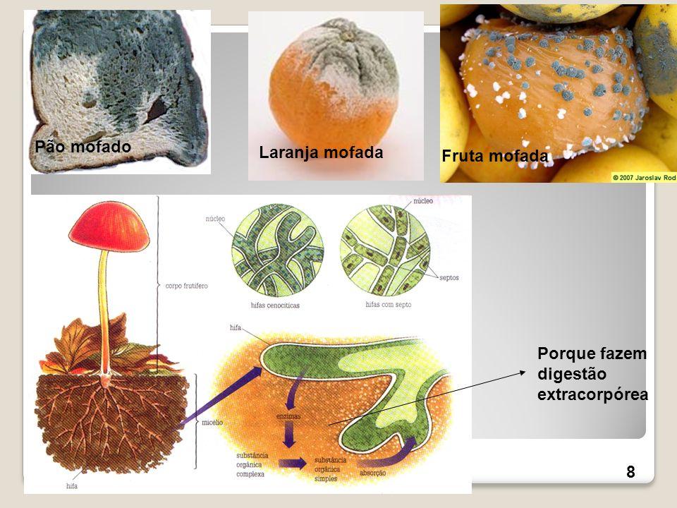 Pão mofado Laranja mofada Fruta mofada Porque fazem digestão extracorpórea 8