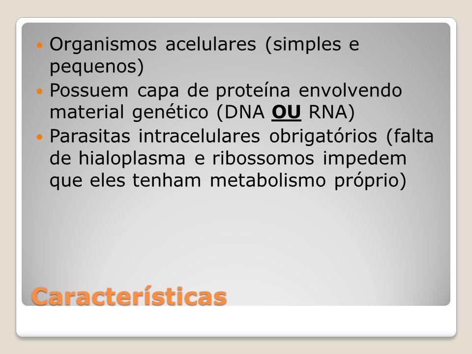 Características Organismos acelulares (simples e pequenos) Possuem capa de proteína envolvendo material genético (DNA OU RNA) Parasitas intracelulares