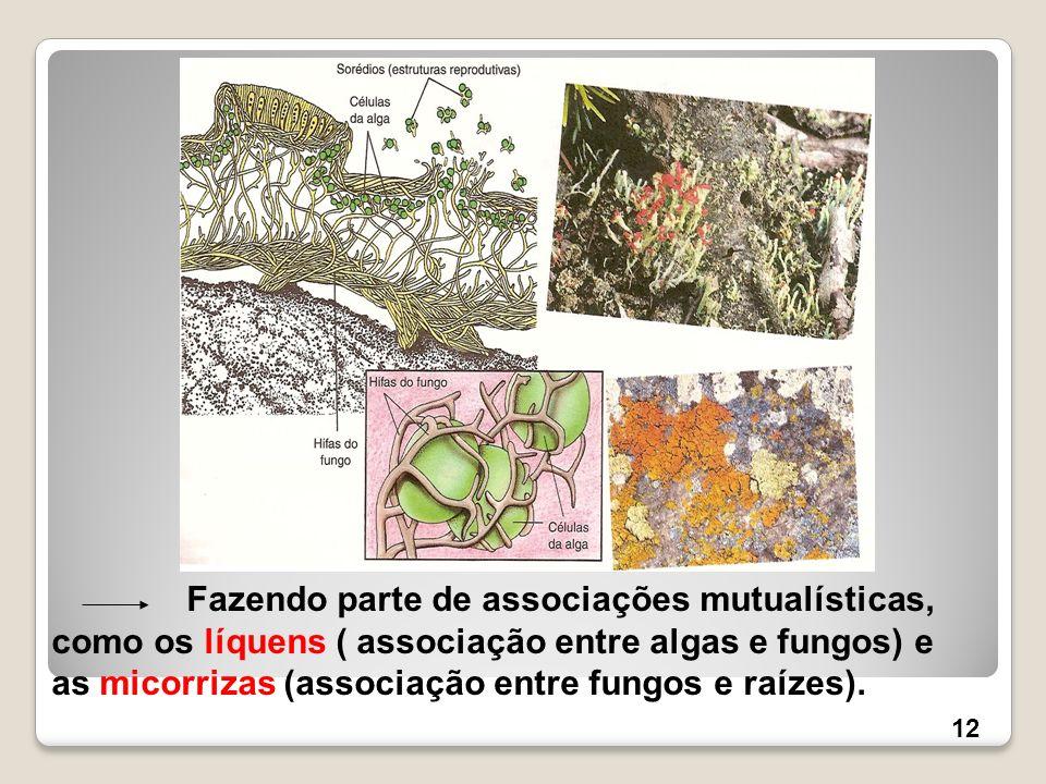 Fazendo parte de associações mutualísticas, como os líquens ( associação entre algas e fungos) e as micorrizas (associação entre fungos e raízes). 12