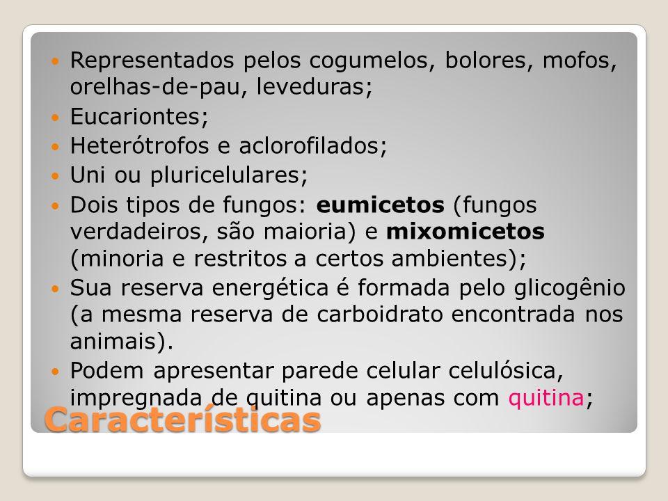 Características Representados pelos cogumelos, bolores, mofos, orelhas-de-pau, leveduras; Eucariontes; Heterótrofos e aclorofilados; Uni ou pluricelul