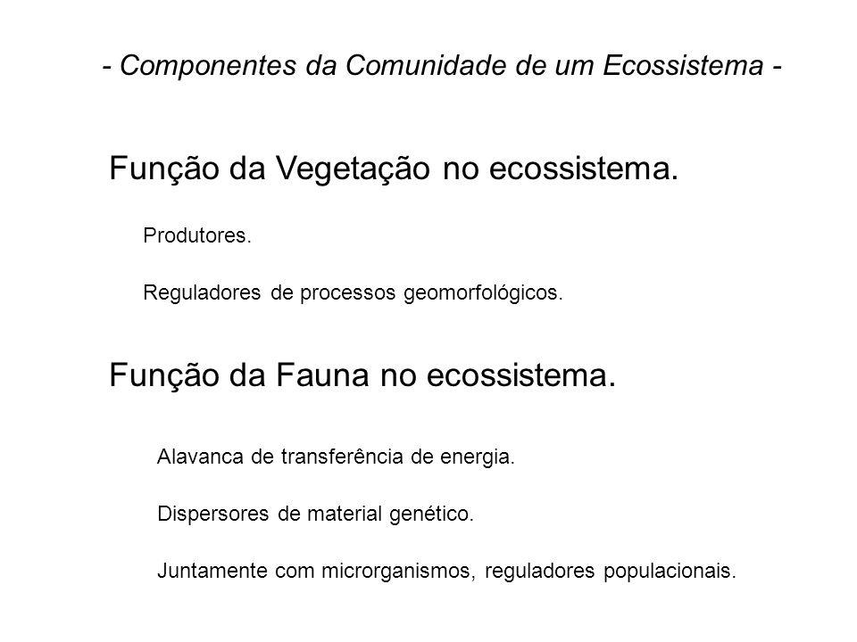 Função da Vegetação no ecossistema. Função da Fauna no ecossistema. - Componentes da Comunidade de um Ecossistema - Produtores. Reguladores de process