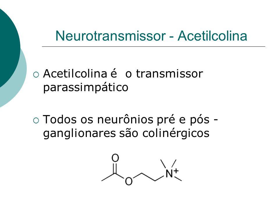 Neurotransmissor - Acetilcolina Acetilcolina é o transmissor parassimpático Todos os neurônios pré e pós - ganglionares são colinérgicos