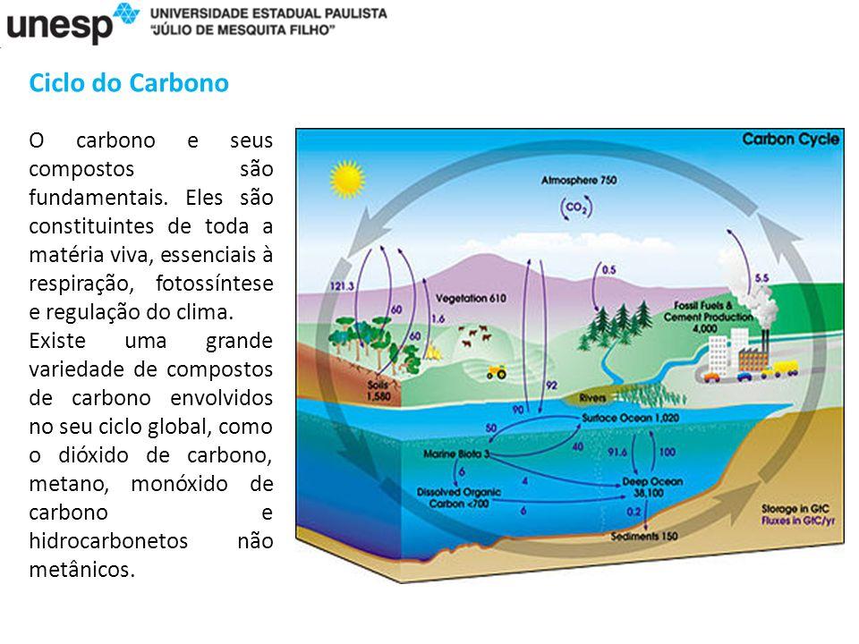 Ciclo do Carbono O carbono e seus compostos são fundamentais.