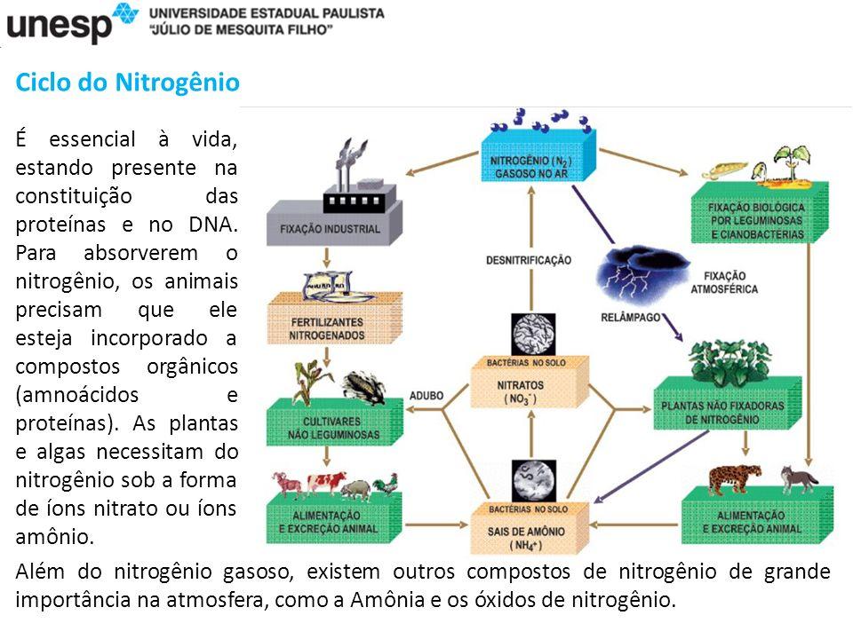 Ciclo do Nitrogênio É essencial à vida, estando presente na constituição das proteínas e no DNA.