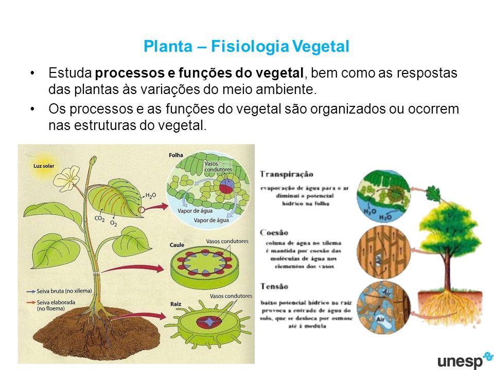 Planta – Fisiologia Vegetal Estuda processos e funções do vegetal, bem como as respostas das plantas às variações do meio ambiente.
