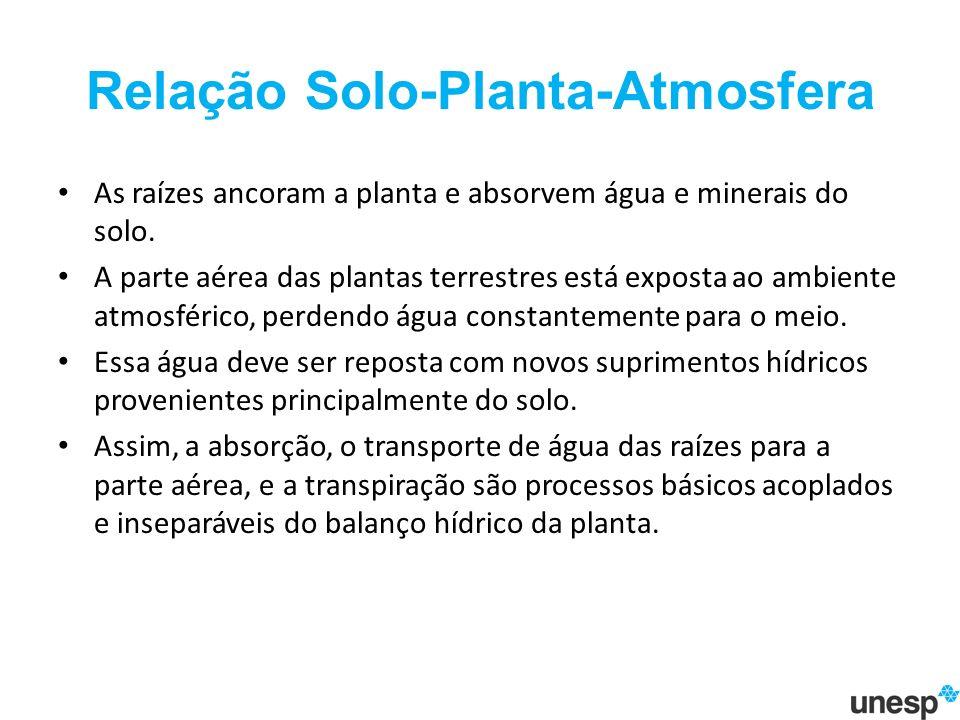 Relação Solo-Planta-Atmosfera As raízes ancoram a planta e absorvem água e minerais do solo.