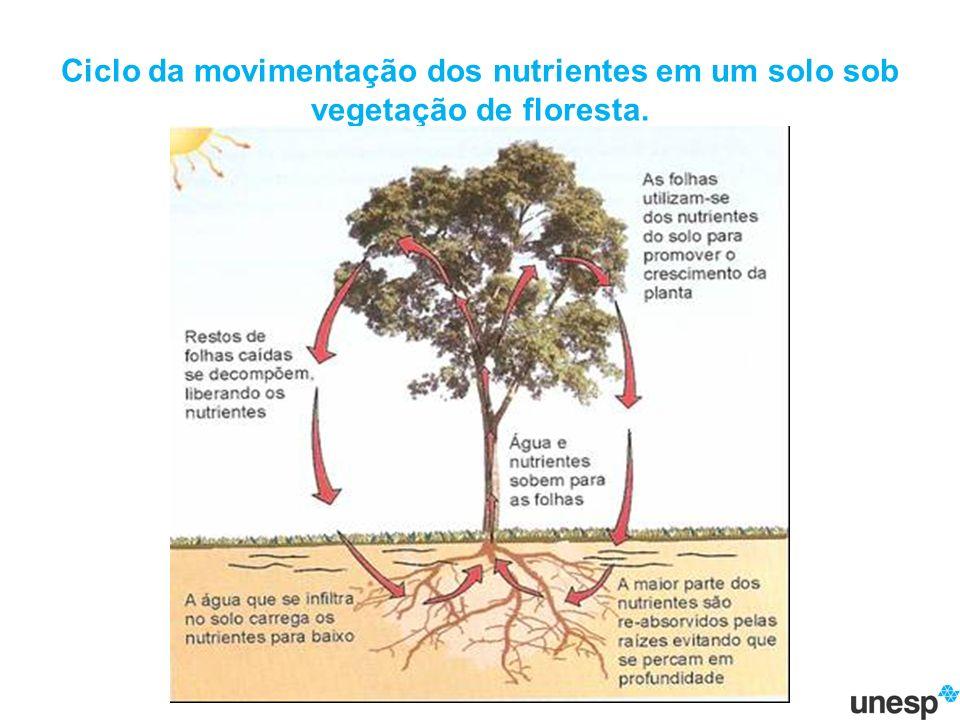 Ciclo da movimentação dos nutrientes em um solo sob vegetação de floresta.