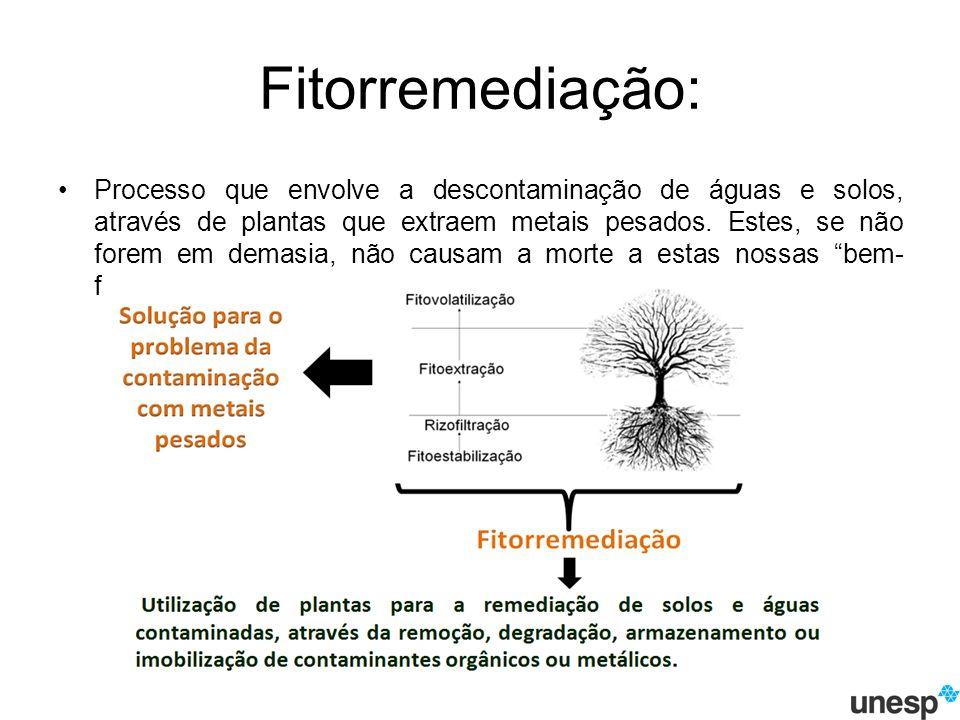 Fitorremediação: Processo que envolve a descontaminação de águas e solos, através de plantas que extraem metais pesados.