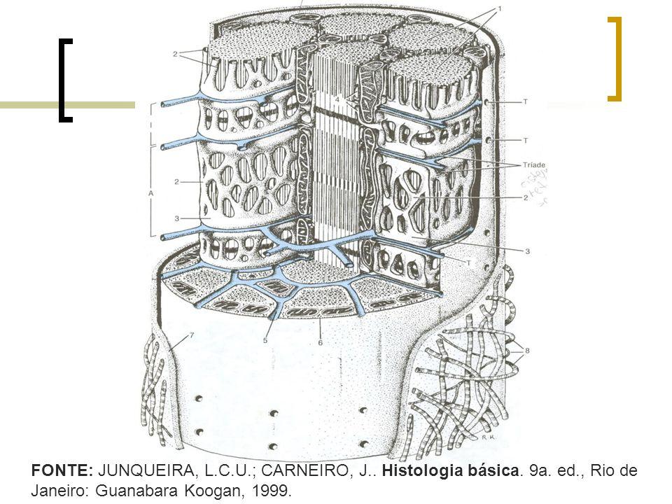 FONTE: JUNQUEIRA, L.C.U.; CARNEIRO, J.. Histologia básica. 9a. ed., Rio de Janeiro: Guanabara Koogan, 1999.