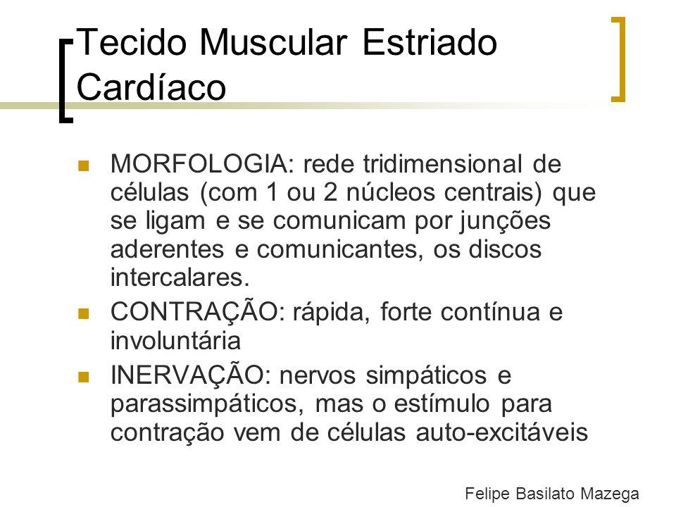 Tecido Muscular Estriado Cardíaco MORFOLOGIA: rede tridimensional de células (com 1 ou 2 núcleos centrais) que se ligam e se comunicam por junções ade