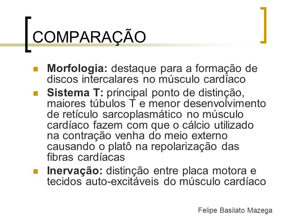 COMPARAÇÃO Morfologia: destaque para a formação de discos intercalares no músculo cardíaco Sistema T: principal ponto de distinção, maiores túbulos T