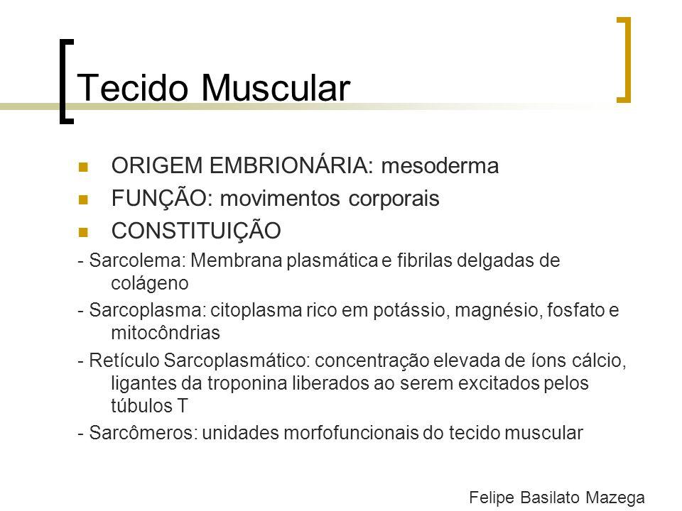 Tecido Muscular ORIGEM EMBRIONÁRIA: mesoderma FUNÇÃO: movimentos corporais CONSTITUIÇÃO - Sarcolema: Membrana plasmática e fibrilas delgadas de coláge