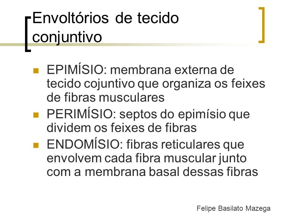 Envoltórios de tecido conjuntivo EPIMÍSIO: membrana externa de tecido cojuntivo que organiza os feixes de fibras musculares PERIMÍSIO: septos do epimí