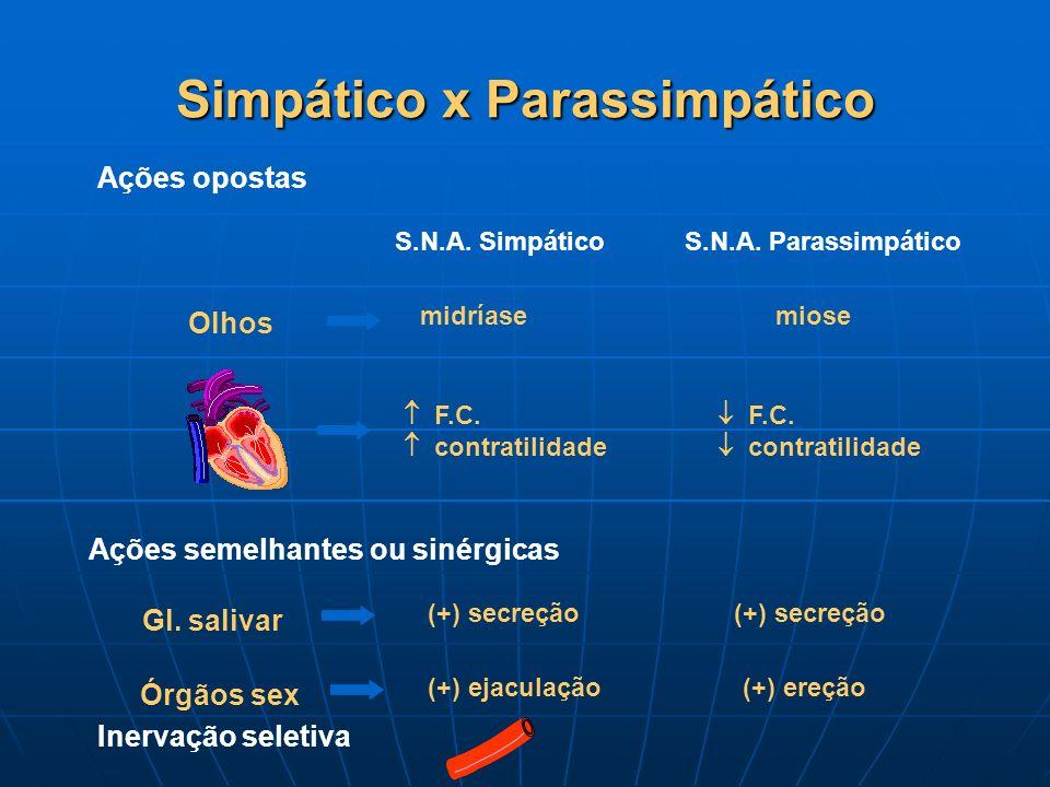 Simpático x Parassimpático Olhos Ações opostas midríase S.N.A. SimpáticoS.N.A. Parassimpático miose F.C. contratilidade F.C. contratilidade Ações seme