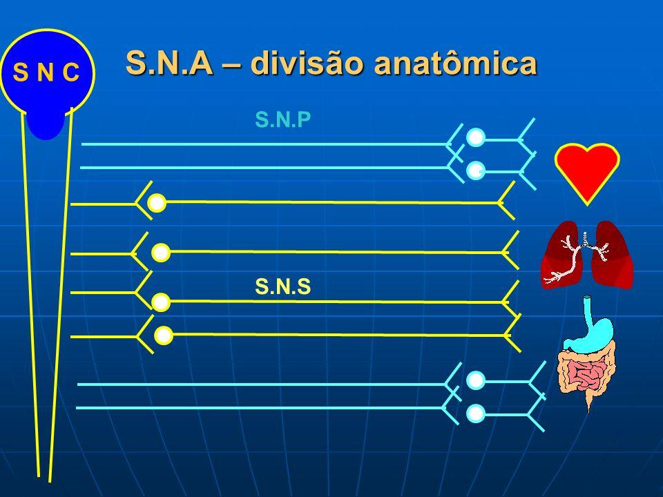 S.N.A – divisão anatômica S N C S.N.P S.N.S