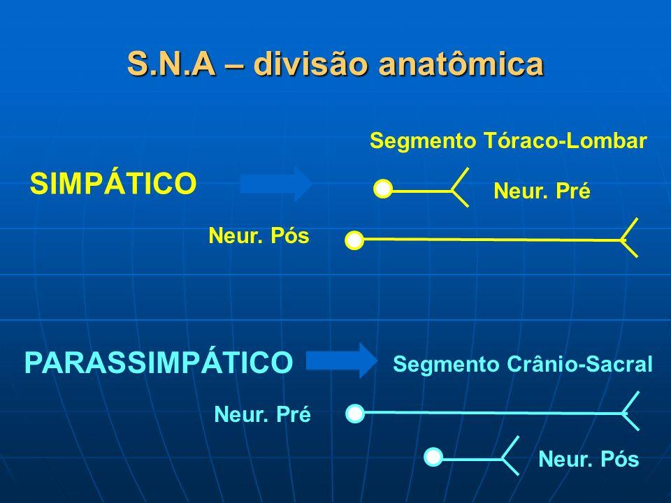 S.N.A – divisão anatômica SIMPÁTICO PARASSIMPÁTICO Segmento Tóraco-Lombar Neur. Pré Neur. Pós Segmento Crânio-Sacral Neur. Pré Neur. Pós