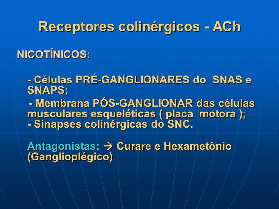 Receptores colinérgicos - ACh NICOTÍNICOS: - Células PRÉ-GANGLIONARES do SNAS e SNAPS; - Membrana PÓS-GANGLIONAR das células musculares esqueléticas (