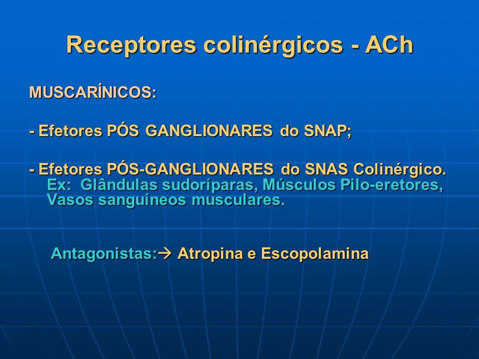 Receptores colinérgicos - ACh MUSCARÍNICOS: - Efetores PÓS GANGLIONARES do SNAP; - Efetores PÓS-GANGLIONARES do SNAS Colinérgico. Ex: Glândulas sudorí