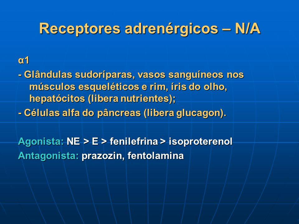 Receptores adrenérgicos – N/A α1 - Glândulas sudoríparas, vasos sanguíneos nos músculos esqueléticos e rim, íris do olho, hepatócitos (libera nutrient