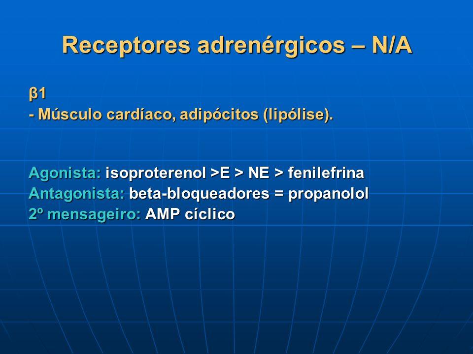 Receptores adrenérgicos – N/A β1 - Músculo cardíaco, adipócitos (lipólise). Agonista: isoproterenol >E > NE > fenilefrina Antagonista: beta-bloqueador