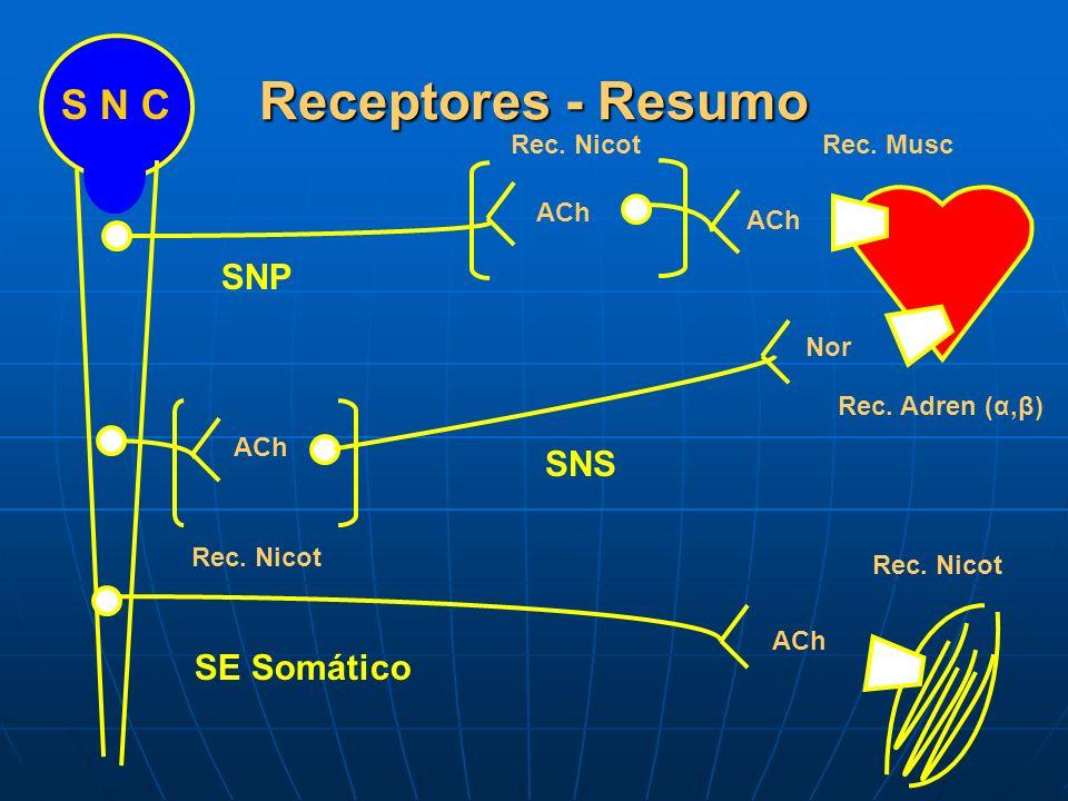 Receptores - Resumo SNP SNS SE Somático S N C Rec. NicotRec. Musc Rec. Adren (α,β) Rec. Nicot ACh Nor