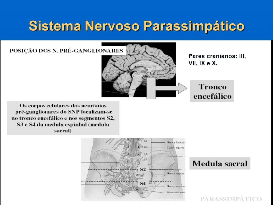 Sistema Nervoso Parassimpático Pares cranianos: III, VII, IX e X.