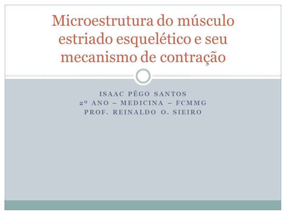 ISAAC PÊGO SANTOS 2º ANO – MEDICINA – FCMMG PROF. REINALDO O. SIEIRO Microestrutura do músculo estriado esquelético e seu mecanismo de contração