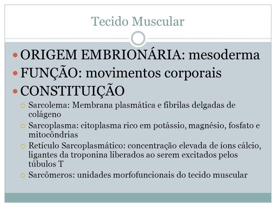 Tecido Muscular ORIGEM EMBRIONÁRIA: mesoderma FUNÇÃO: movimentos corporais CONSTITUIÇÃO Sarcolema: Membrana plasmática e fibrilas delgadas de colágeno