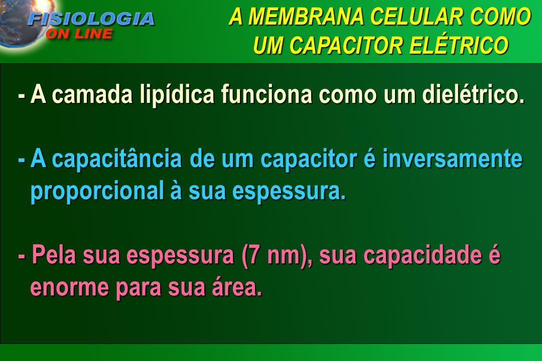 EQUAÇÃO DE NERST Equação de Nernst – Valor do potencial, entre as duas faces da membrana, que impede a difusão efetiva de um íon em qualquer direção a