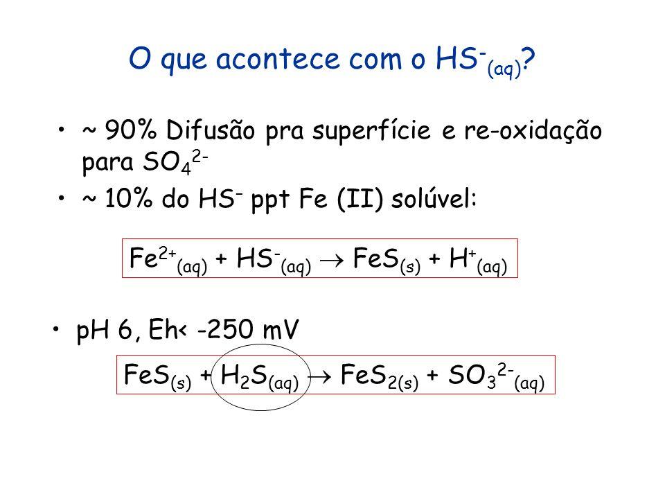 O que acontece com o HS - (aq) ? ~ 90% Difusão pra superfície e re-oxidação para SO 4 2- ~ 10% do HS – ppt Fe (II) solúvel: Fe 2+ (aq) + HS - (aq) FeS