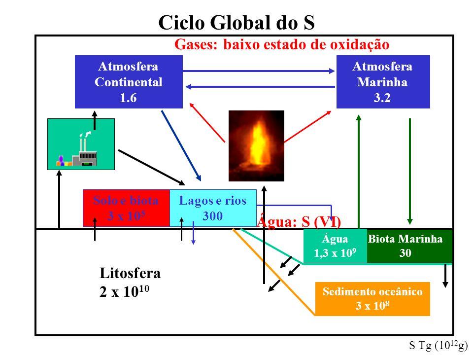 Ciclo Global do S Atmosfera Continental 1.6 Atmosfera Marinha 3.2 Biota Marinha 30 Litosfera 2 x 10 10 Sedimento oceânico 3 x 10 8 Água 1,3 x 10 9 Lag