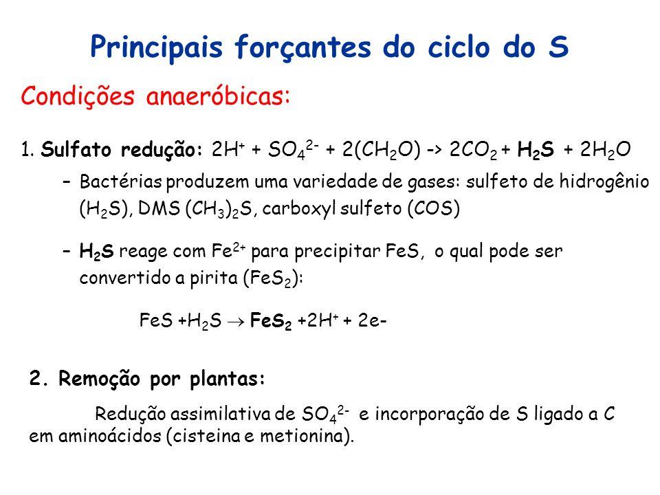 Principais forçantes do ciclo do S Condições anaeróbicas: 1. Sulfato redução: 2H + + SO 4 2- + 2(CH 2 O) -> 2CO 2 + H 2 S + 2H 2 O –Bactérias produzem
