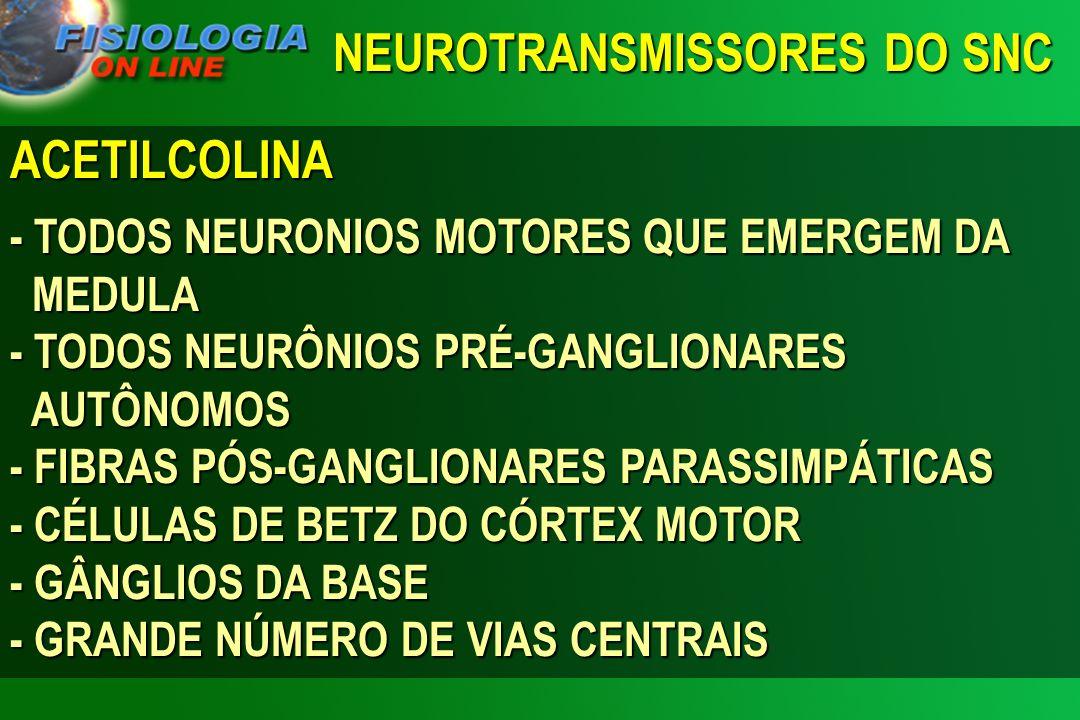 NEUROTRANSMISSORES DO SNC ACETILCOLINA - TODOS NEURONIOS MOTORES QUE EMERGEM DA MEDULA - TODOS NEURÔNIOS PRÉ-GANGLIONARES AUTÔNOMOS - FIBRAS PÓS-GANGL