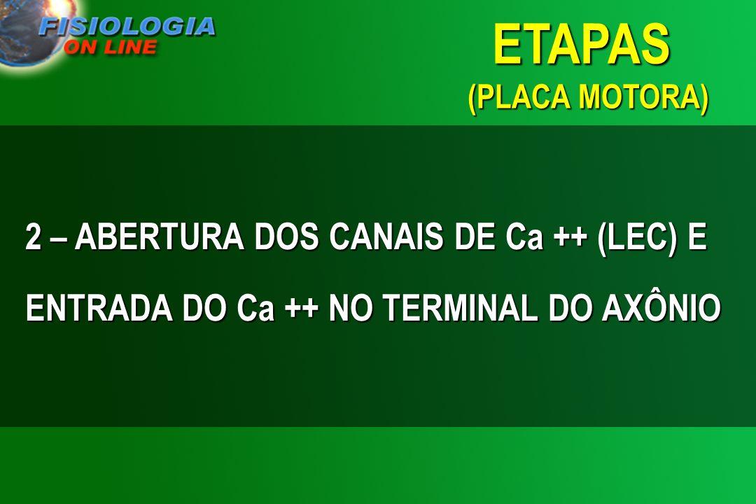 2 – ABERTURA DOS CANAIS DE Ca ++ (LEC) E ENTRADA DO Ca ++ NO TERMINAL DO AXÔNIO