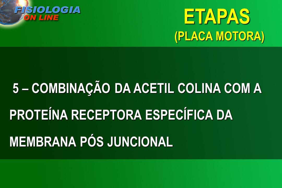5 – COMBINAÇÃO DA ACETIL COLINA COM A PROTEÍNA RECEPTORA ESPECÍFICA DA MEMBRANA PÓS JUNCIONAL