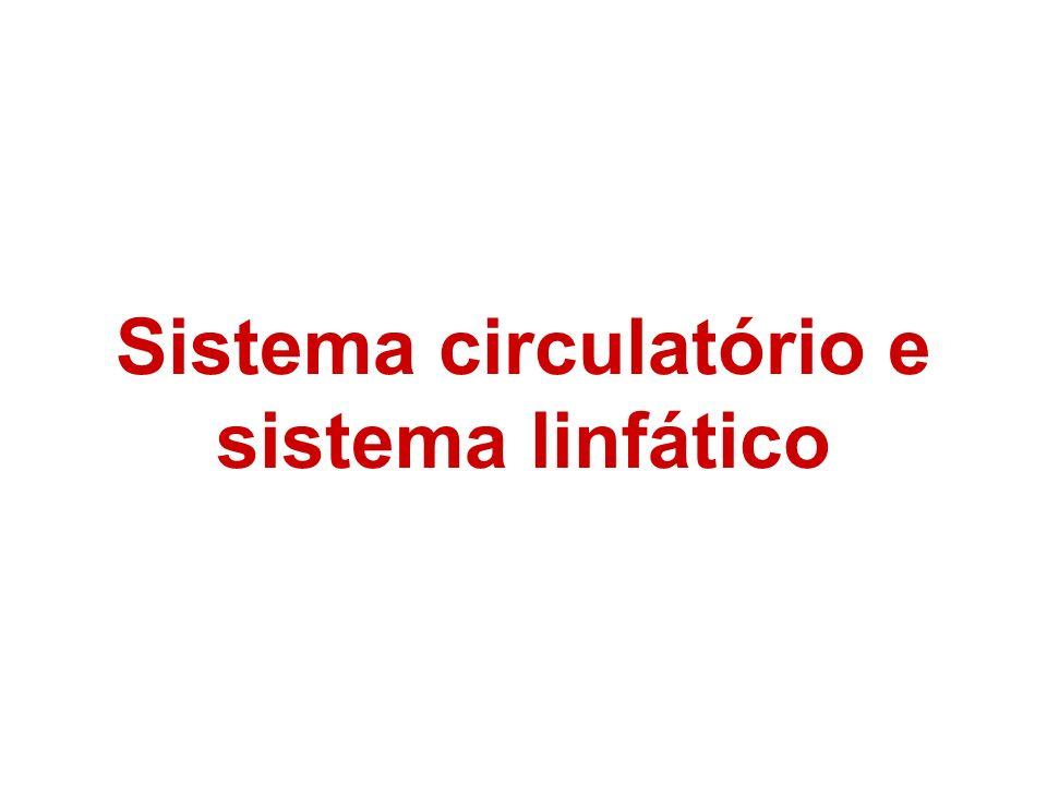 Sistema linfático: Formado por grandes vasos linfáticos distribuídos pelo corpo todo tendo por função recolher o líquido tissular (entre os tecidos).