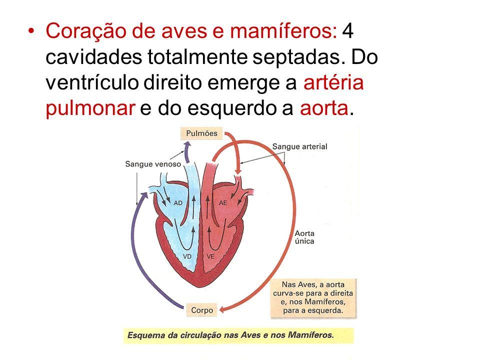 Coração de aves e mamíferos: 4 cavidades totalmente septadas. Do ventrículo direito emerge a artéria pulmonar e do esquerdo a aorta.