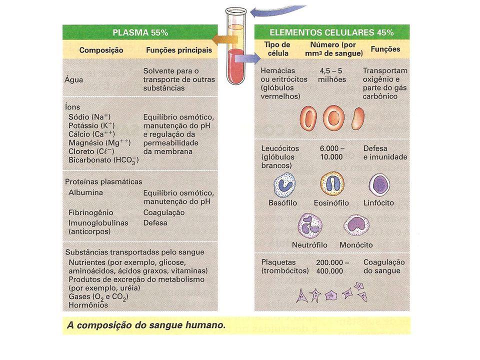 Os linfonodos retém células cancerígenas temporariamente e outros resíduos como germes.