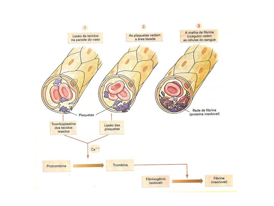 Tipos de circulação: Aberta ou lacunar: Os vasos são abertos nas extremidades e o líquido bombeado pelo coração se espalha em hemoceles, banhando diretamente os tecidos.
