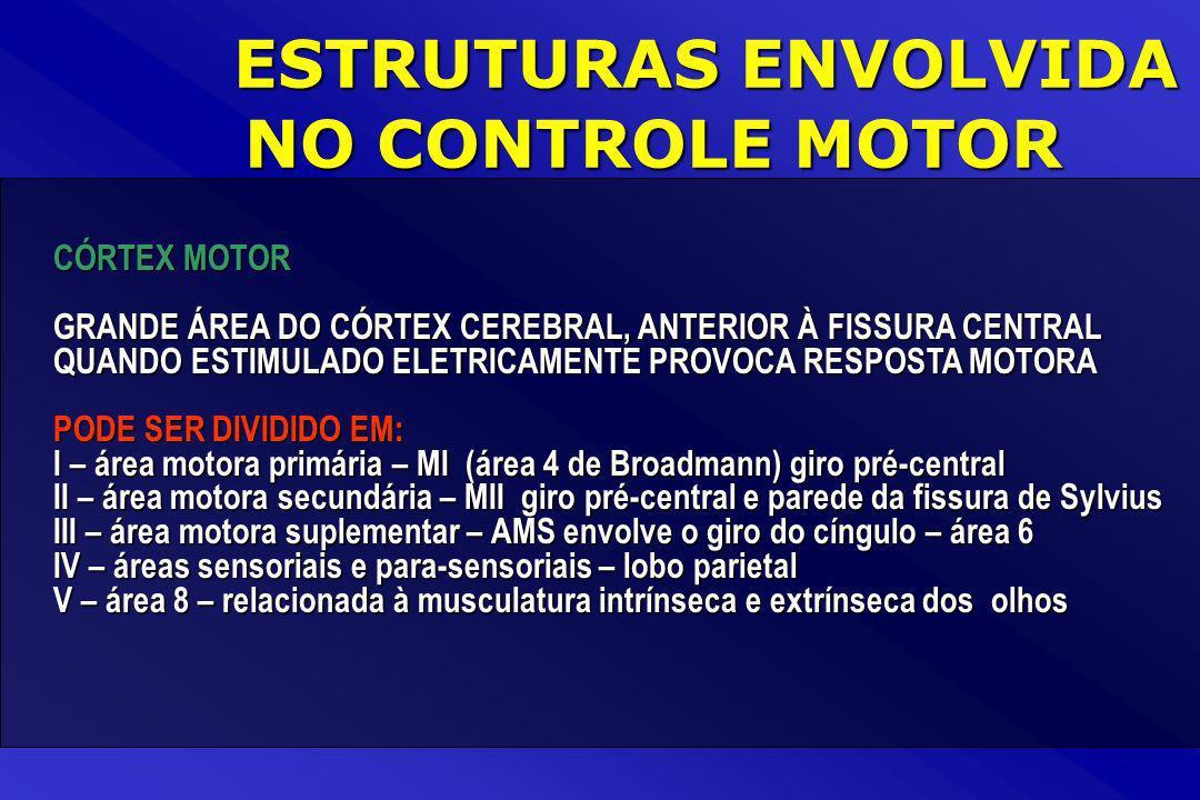 CÓRTEX MOTOR GRANDE ÁREA DO CÓRTEX CEREBRAL, ANTERIOR À FISSURA CENTRAL QUANDO ESTIMULADO ELETRICAMENTE PROVOCA RESPOSTA MOTORA PODE SER DIVIDIDO EM: