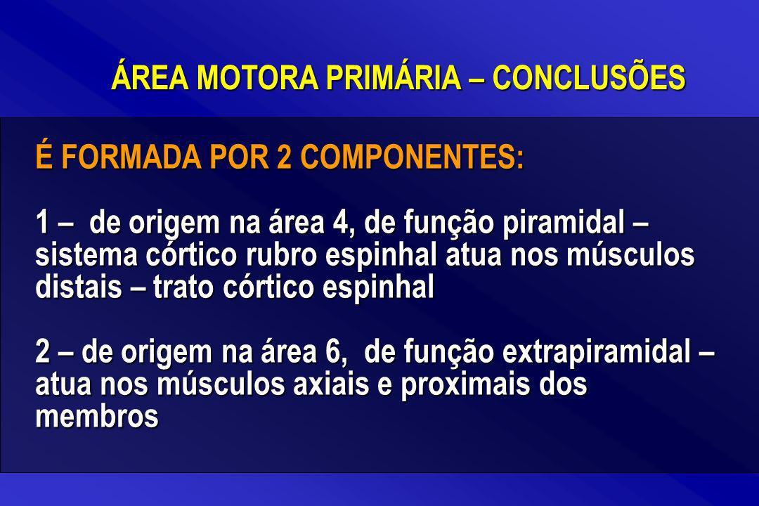 É FORMADA POR 2 COMPONENTES: 1 – de origem na área 4, de função piramidal – sistema córtico rubro espinhal atua nos músculos distais – trato córtico e