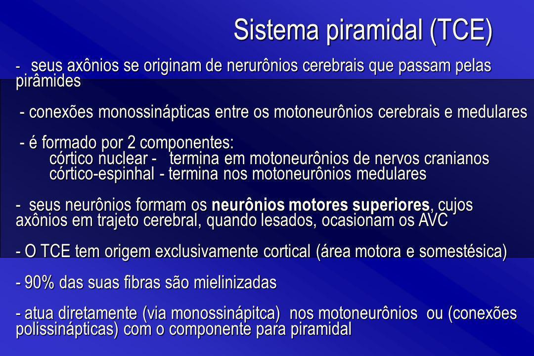 - seus axônios se originam de nerurônios cerebrais que passam pelas pirâmides - conexões monossinápticas entre os motoneurônios cerebrais e medulares