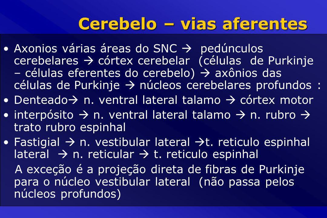 Cerebelo – vias aferentes Axonios várias áreas do SNC pedúnculos cerebelares córtex cerebelar (células de Purkinje – células eferentes do cerebelo) ax