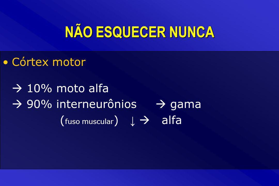 NÃO ESQUECER NUNCA Córtex motor 10% moto alfa 90% interneurônios gama ( fuso muscular ) alfa